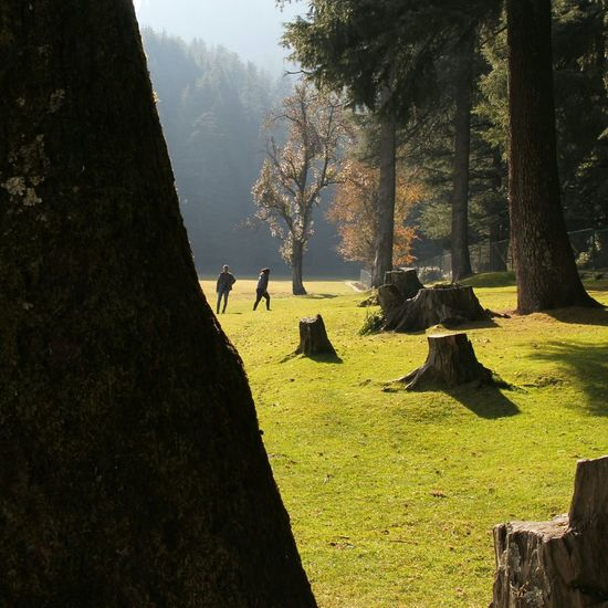 Khajjiar Life In The Forest Forest Mystery