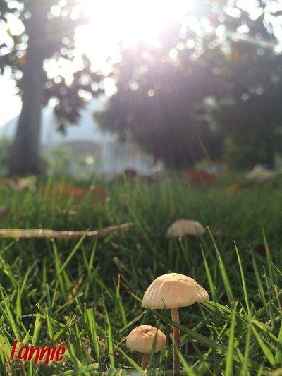 Enjoying Life Nature HDR Sunshine mushroom