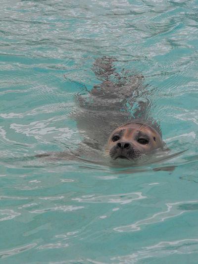Animal Animal Themes Mammal Nature Sea Life Seal Water Wildlife