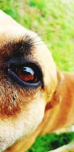 Eyedog EyeEm Best Shots EyeEm Selects Portrait Eyesight Looking At Camera Eyelash Pets Close-up