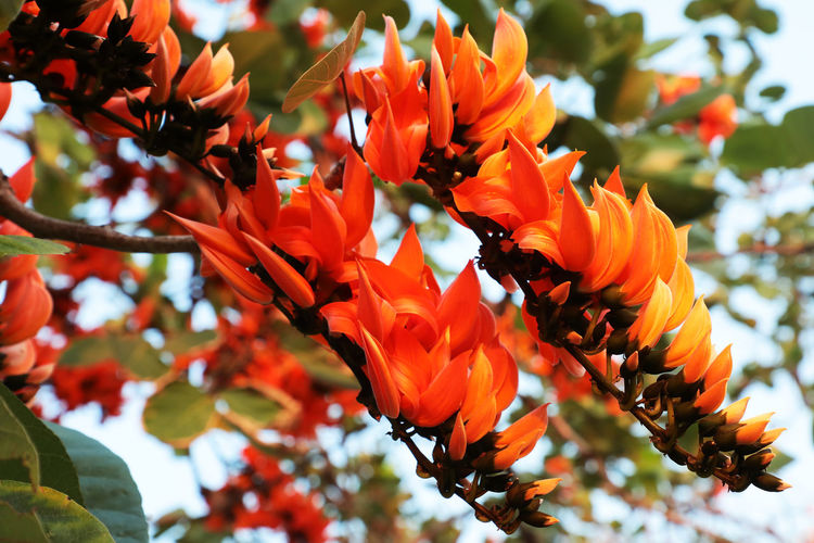 Close-up of bee on orange flowering plant