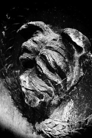 Pine Ridge Pet Cemetery Dedham Ma 2018 Cemetery Death Grave Mourning Statue Animal Blackandwhite Carving Close-up Curiosity Dog Dog Statue Gravestone Mansbestfriend Massachusetts Memento Mori Old Pet Pine Ridge Remeberance Sculpture Sculptures Statue Textured  Weathered