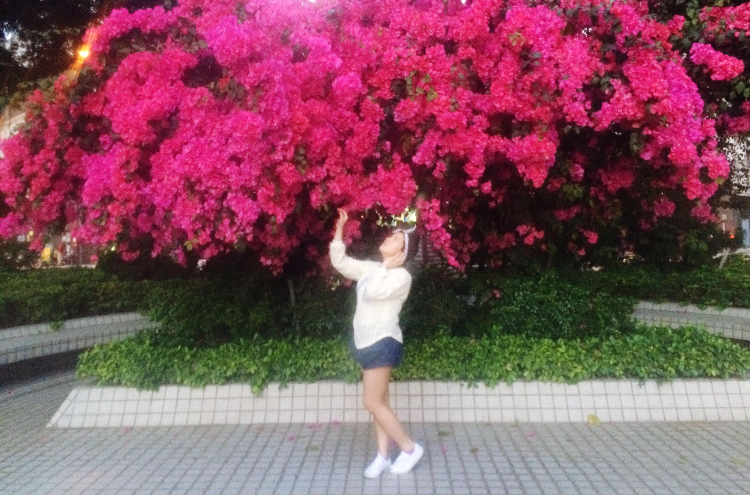 flower, lifestyles, full length, leisure activity, standing, casual clothing, person, pink color, growth, tree, park - man made space, young women, grass, plant, dress, young adult, outdoors, freshness