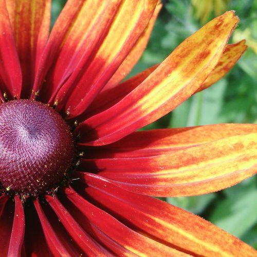 Солнечный цветок. цвет цветы натюрморт Still Life Colors Flowers No People Close-up Plant Outdoors Petal