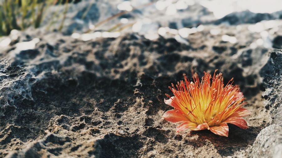Close-Up Of A Flower On Sand