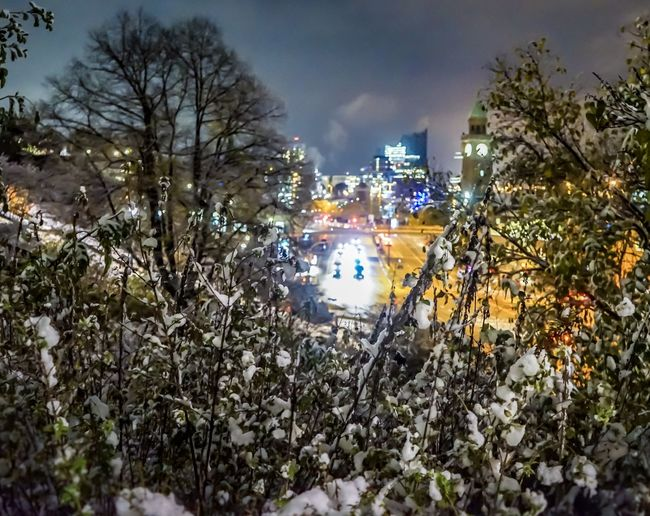 Cold Night Nature Building Exterior No People Outdoors Long Exposure Architecture Travel Destinations Built Structure Sky Illuminated Night Flower Head First Snow From Autumn To Winter Last Flower Before Winter Scenics Cold Nights Port Of Hamburg  Harbour Snow Covered Calm