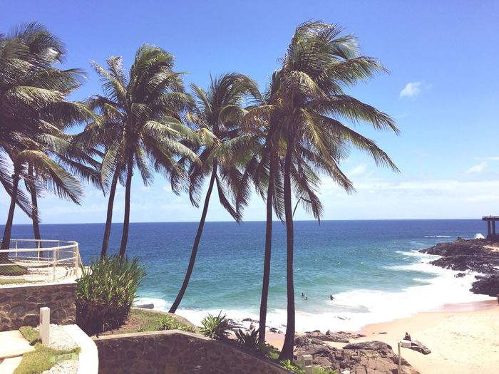 Scenic view of palm trees on beach