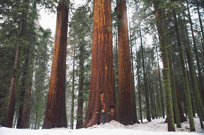 Beauty In Nature California Cold Temperature Curly Hair Day Forest Girl Landscape Mountains Nature Nature No People Outdoors Road Roadtrip Scenics Sequoia Sequoia National Park Snow Tranquility Tree Tree Love Tree Trunk Trees Winter Place Of Heart Lost In The Landscape