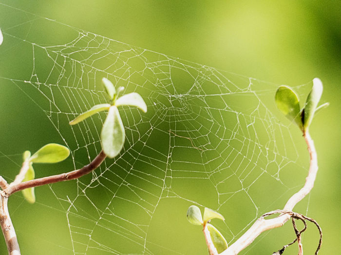 Life exists in all corners Animal Themes Animal Wildlife Animals In The Wild Beauty In Nature Close-up Day Focus On Foreground Fragility Insect Nature No People One Animal Outdoors Spider Spider Web Survival Web