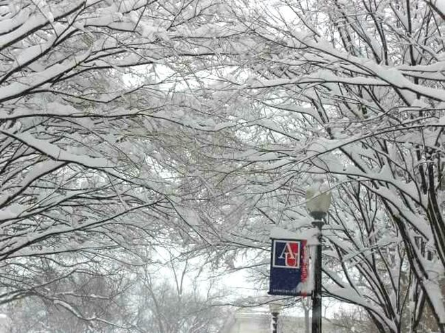 Snowy Canopy Snowpocalypse American University Once An Eagle, Always An Eagle Snowscape College Campus Snow It's Cold Outside Snow Accumulation Snow Covered Trees