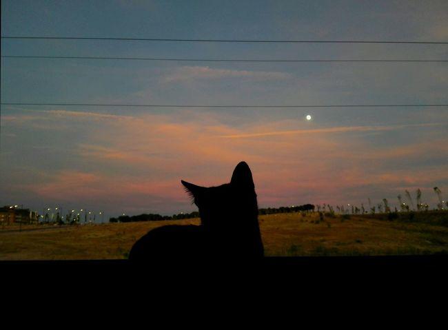 Ese gato enamorado de la luna' Cats Gato Negro Home Hello World Taking Photos Photography Atardecer Lateafternoon Nature Check This Out