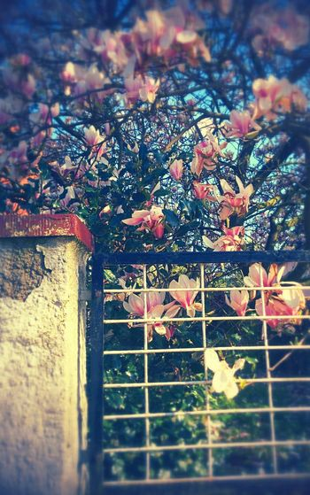 Summer ist coming <3 Flowersandstuff..