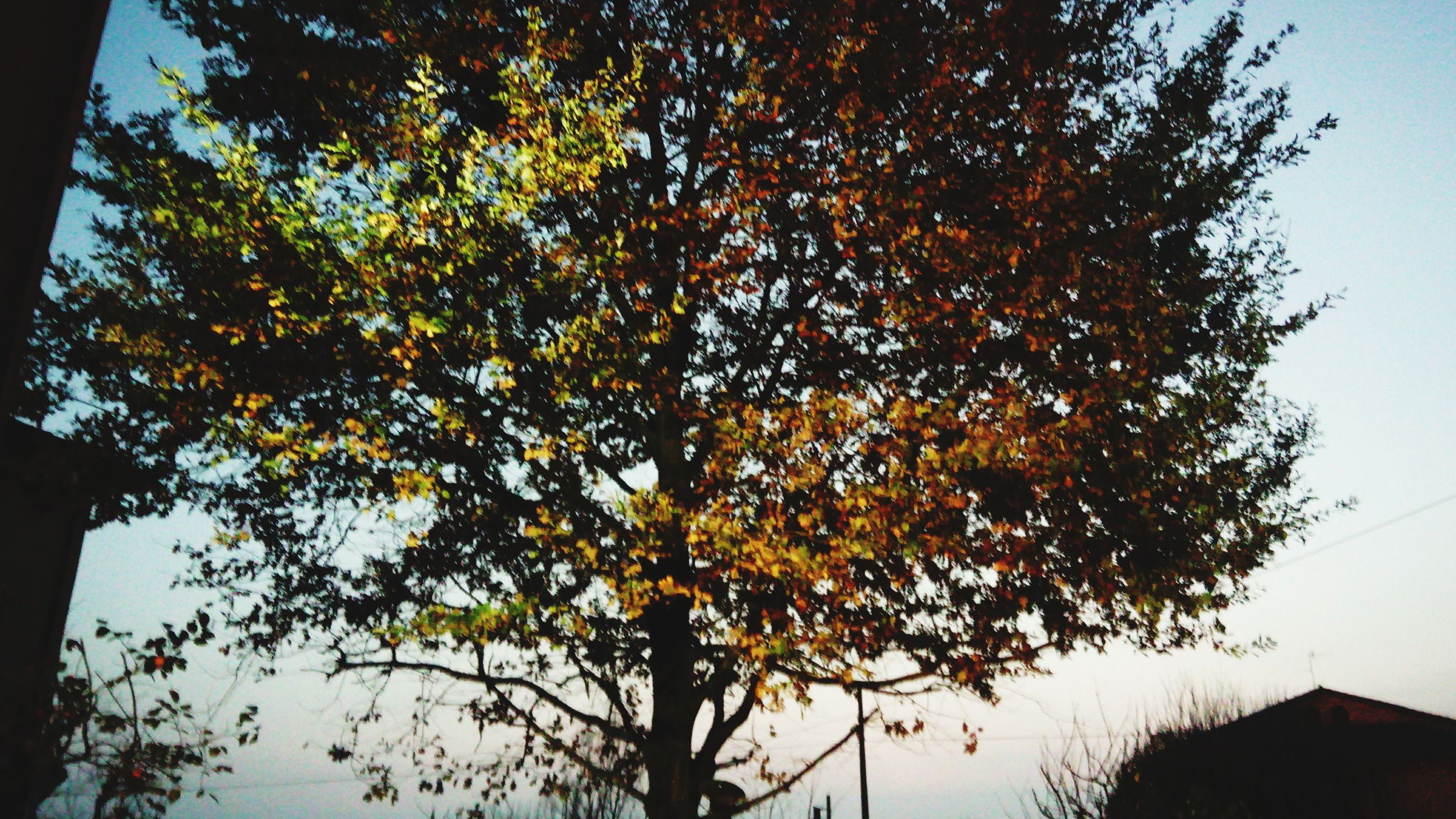 tree, low angle view, branch, sky, nature, growth, building exterior, built structure, beauty in nature, clear sky, architecture, tranquility, orange color, autumn, silhouette, scenics, sunset, leaf, tree trunk, no people