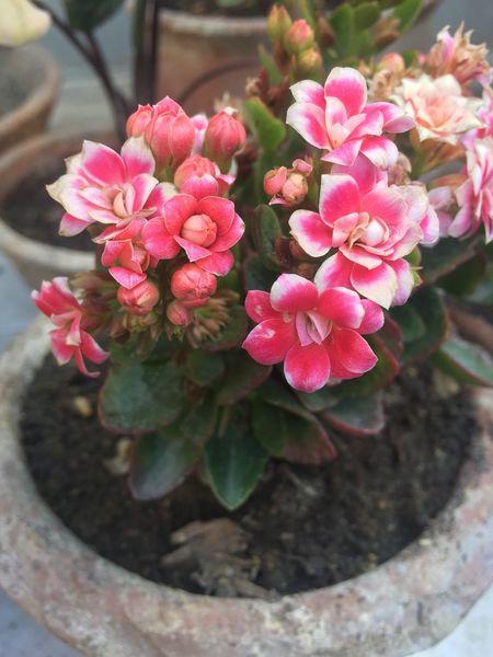 Flower Pink Color Fragility Plant Close-up