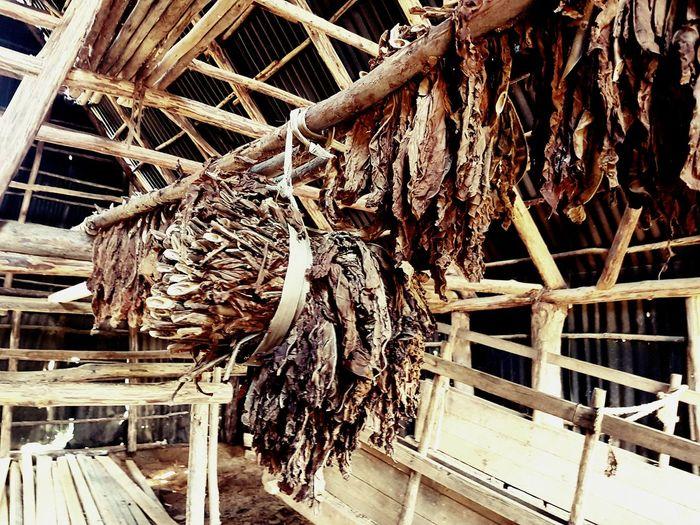 Cigar Plantation Cygaro Cuba Cuban Life Wood - Material Close-up Architecture