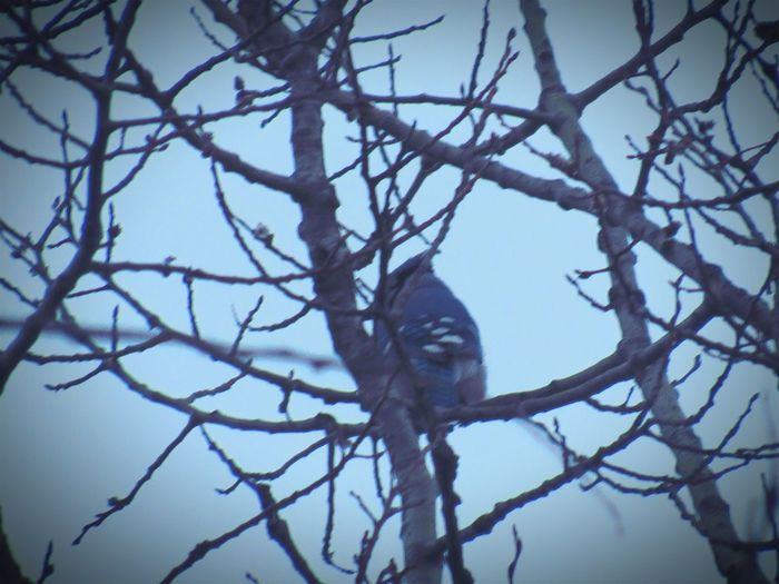Taking Photos Check This Out Stormy Weather Wayuphigh Bluejay Hiding Hardshotbird Spring Into Spring