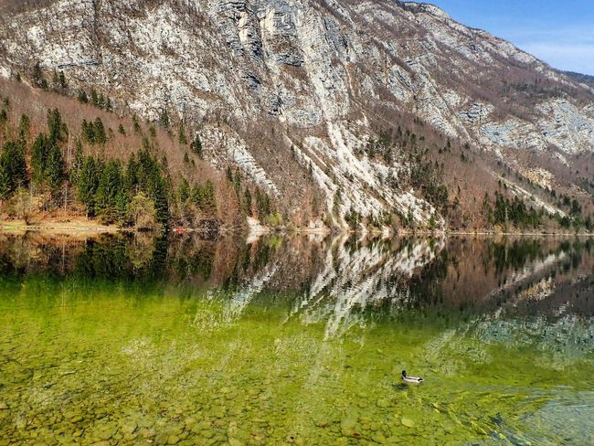 💚💚GrEEn paradiSe💚💚 EyeEmReady #reflections Nature_collection Bohinj, Slovenia Slovenia IfeelsLOVEnia Day Grass Lake Beauty In Nature Tranquility Scenics