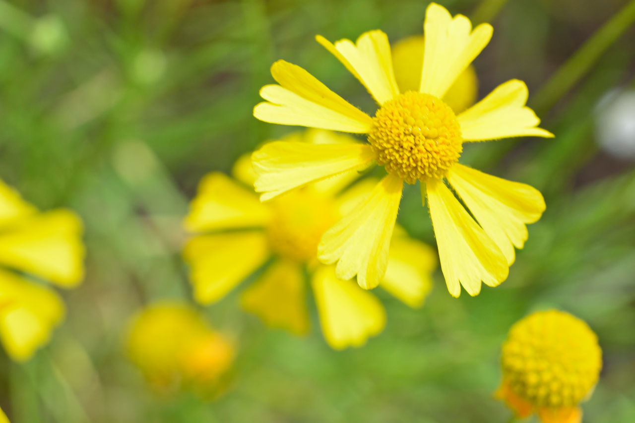 yellow, flower, fragility, petal, freshness, flower head, nature, beauty in nature, growth, plant, focus on foreground, outdoors, day, blooming, no people, close-up, springtime