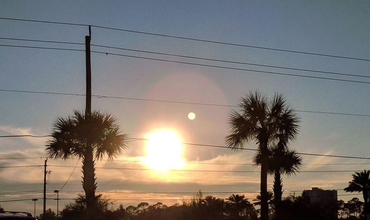 sunset between the palm trees Sunset Sky Tree Cloud - Sky