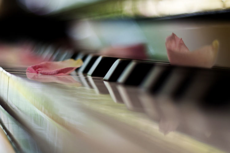 Natural Light Piano Reflection Arts Culture And Entertainment Close-up Indoors  Music Musical Instrument Petal Petals Piano Piano Key Rose - Flower Rose🌹 Selective Focus