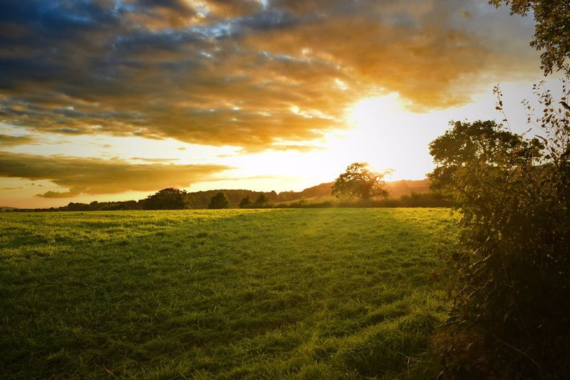 Tranquil Scene Scenics Landscape Tranquility Tree Sunset Beauty In Nature Cloud - Sky Grass Sunlight Field Sky Cloudy Nature Green Color Atmospheric Mood Grassy Dramatic Sky Non-urban Scene Growth