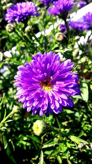 Flower Purple Flower Head Plant Nature No People Beauty In Nature Outdoors Day