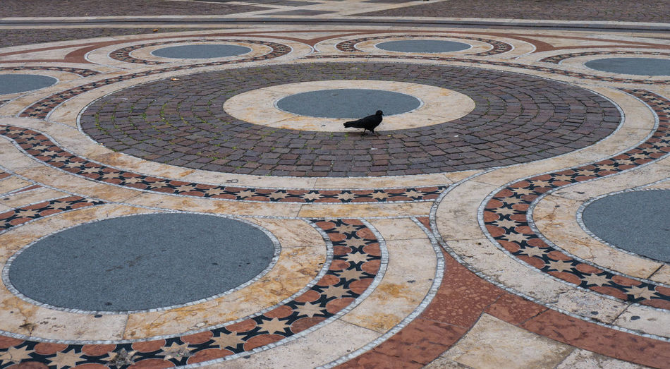 Animal Animals Architectural Feature Bird Circle Curve Design History Lonely Outdoors Pattern Paving Stone Pigeon Stone Material
