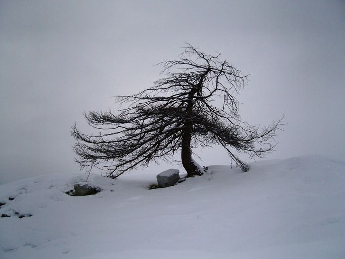 Alone... Macro Macro Photography Nature Tree Snow Winter Cold Temperature Pinaceae Pine Tree Single Tree
