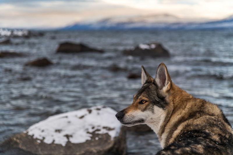 Dog looking at sea shore