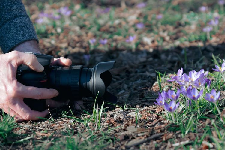 Cropped person photographing purple flowers on field