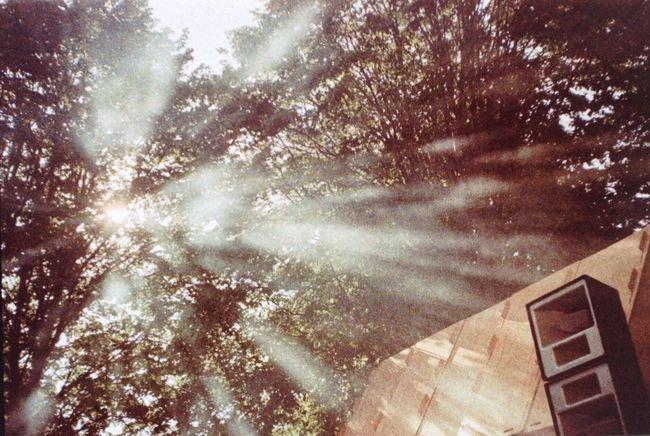 Tree Sunbeam Low Angle View Sunlight Lens Flare Beauty In Nature Nature Scenics Growth Sunrays Sun Day Outdoors Majestic Tranquil Scene Bright Tranquility Shinning High Section Solar Flare Analogue Photography 35mm