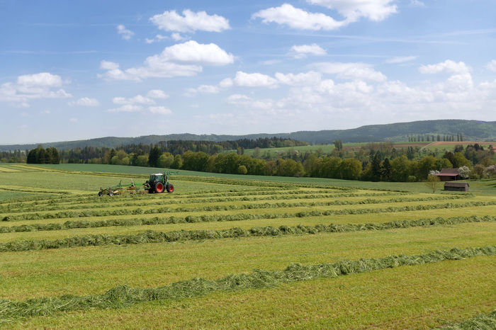 Tractor at harvest of green fodder on a field in spring Agriculture Field Grass Harvester Machine Machinery Mowed Grass Rural Tractor Windrow Work Working Countryside Farming Grassland Harvest Harvesting Hay Rake Landscape Meadow Mown Pick Up Row Silage Swath