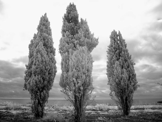 Beauty In Nature Cipreses Cloud - Sky Day Field Growing Growth Idyllic Infrared Photography Landscape Nature No People Non-urban Scene Outdoors Plant Rural Scene Scenics Sea Sky Three Tranquil Scene Tranquility Tree