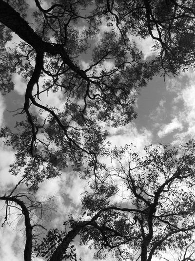 #nature #filterstorm