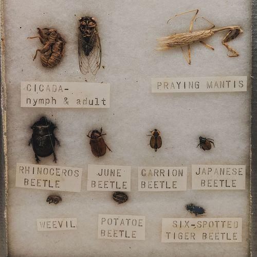 specimens.