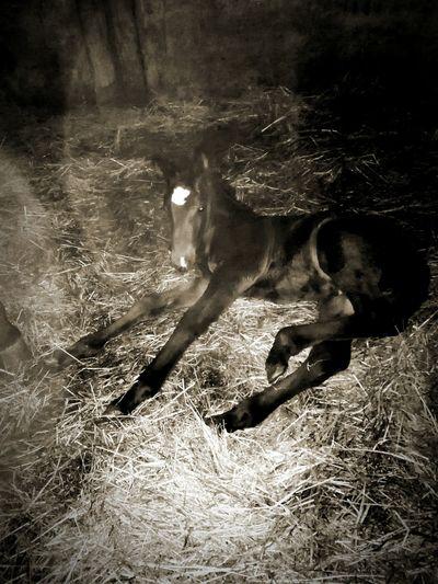 Horse Baby Horse Little Horse Nature