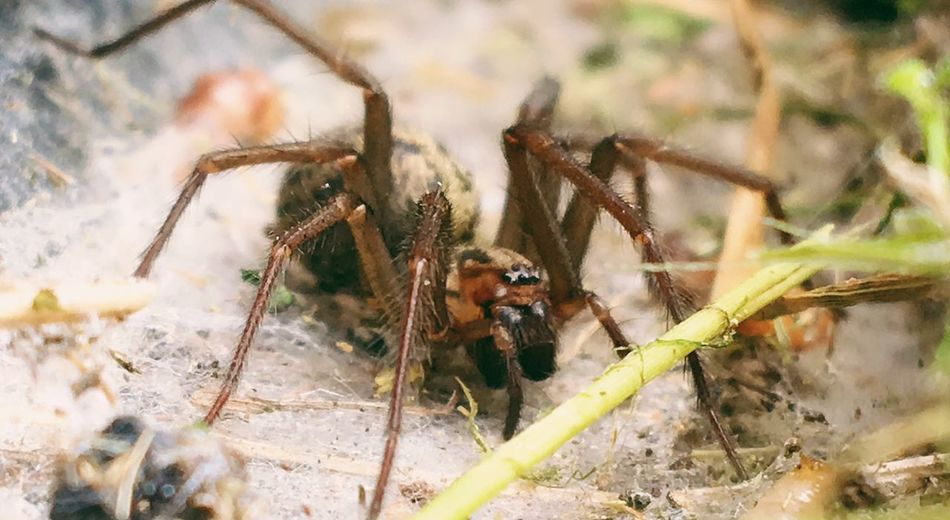 Close-up of spider on field