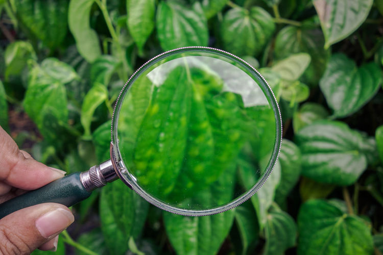 Cropped hand of person holding magnifying glass against plants