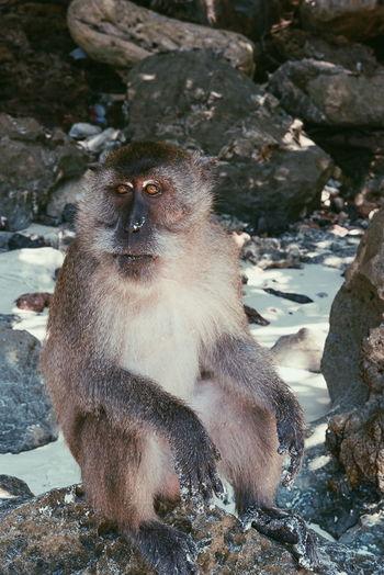Hanging Out Hello World Enjoying Life Relaxing Monkey Monkey Island Thailand