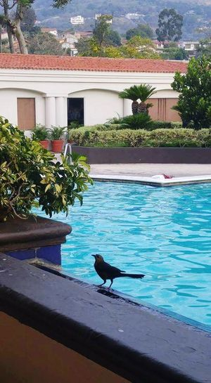 Water Swimming Pool House One Animal Residential Building Architecture Building Exterior Built Structure Outdoors Animal Themes No People Animals In The Wild Day Swimming Sea Bird