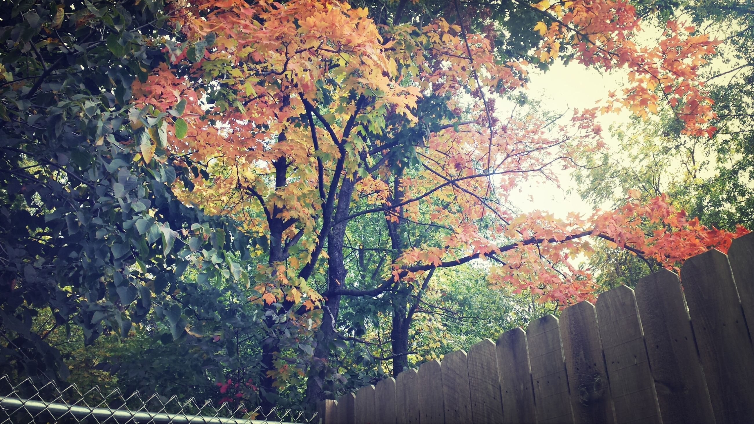 tree, growth, branch, beauty in nature, nature, autumn, flower, change, season, tranquility, leaf, red, day, freshness, plant, outdoors, growing, no people, orange color, tranquil scene