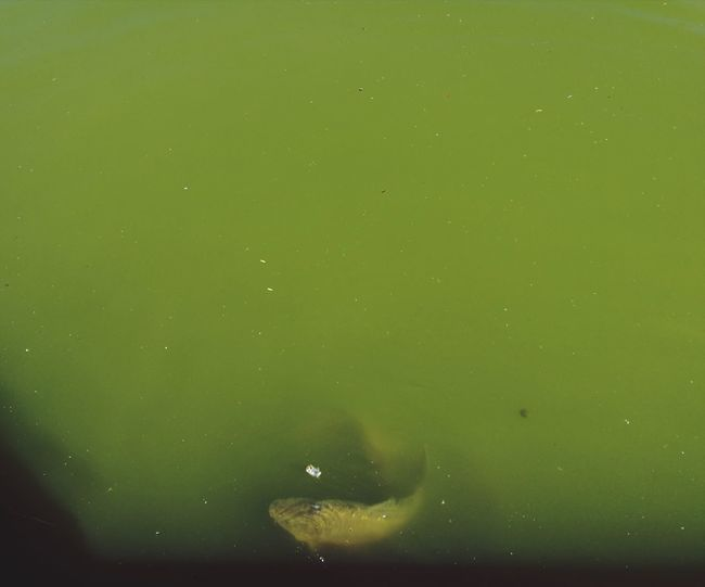 Full frame shot of jellyfish swimming in water