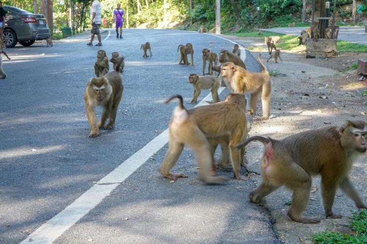 Monkeys on the
