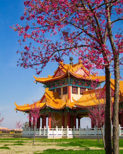 Travel Buddhism Buddhist Temple Flowers Blossoms  Blossom Low Angle View Place Of Worship Day Religion Belief No People Nature Tree Sky Building Exterior Architecture Built Structure Travel Destinations Building Outdoors