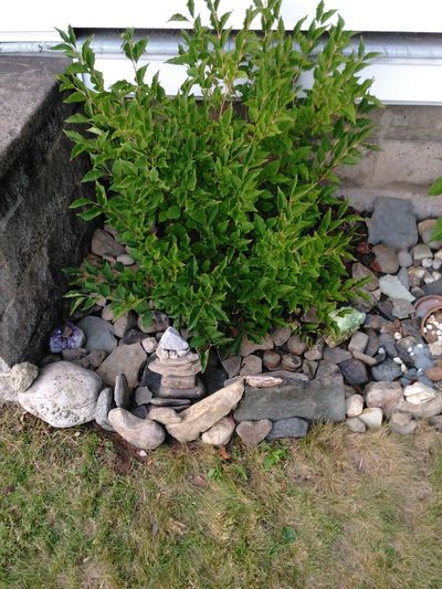 Phase 2 now complete.. Stone - Object Outdoors Beauty In Nature Large Group Of Objects Stone Material Nature Freshness No People Stone Rock Garden Being Creative. Expressing Myself. What A Beautiful Life Surface Level Change Your Perspective Our World Thru My Eyes Check This Out Beauty In Nature