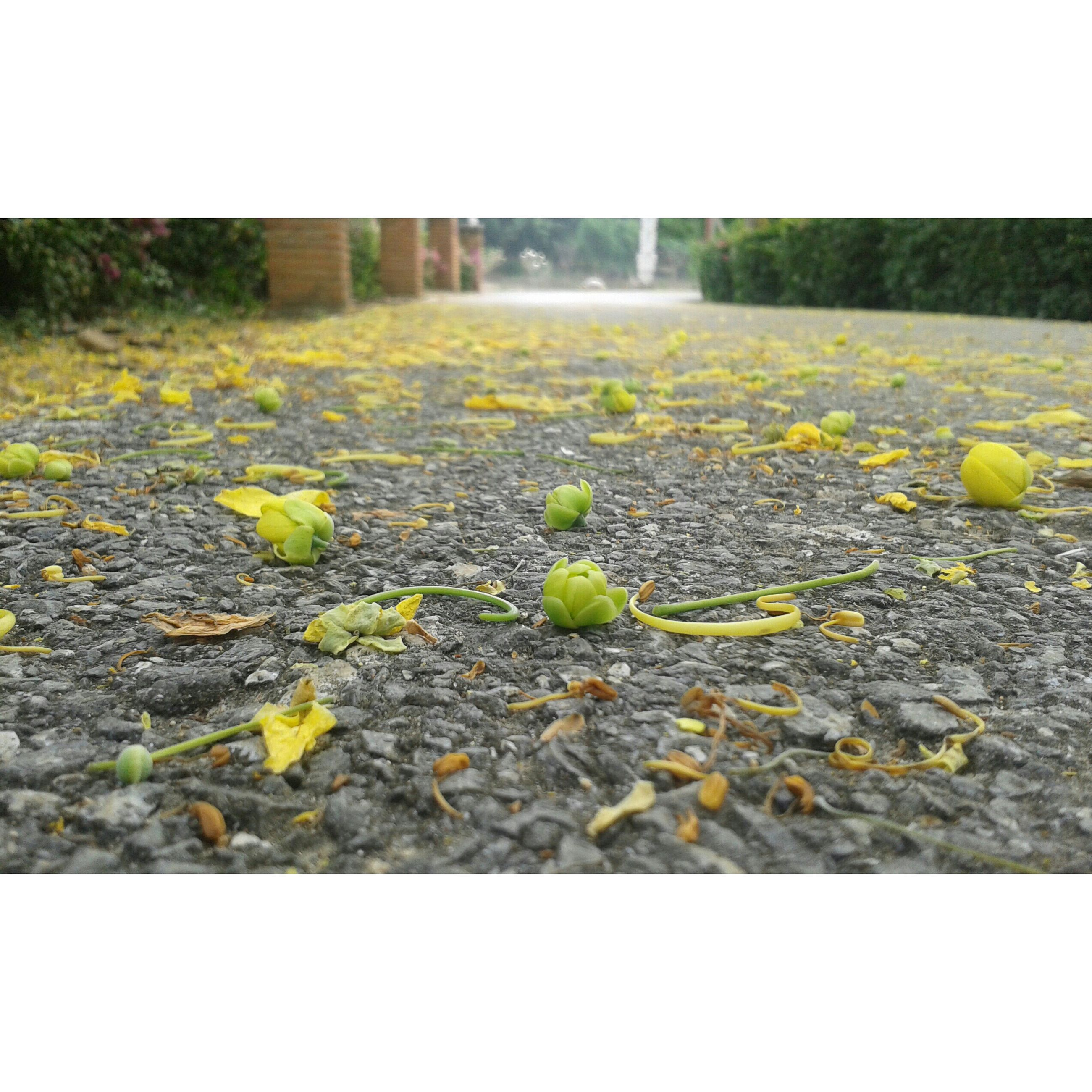 transfer print, auto post production filter, leaf, fragility, yellow, nature, plant, flower, field, growth, surface level, dry, beauty in nature, falling, fallen, season, autumn, outdoors, freshness, day