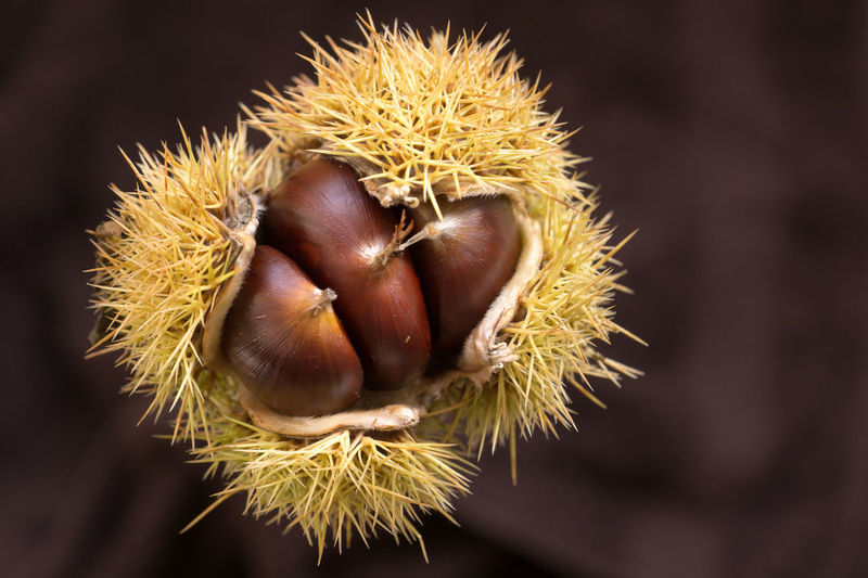 Autumn Autumn Colors Chestnut Sweet Chestnut Chestnut - Food Close-up Focus On Foreground Food Food And Drink Healthy Eating Nature No People Nut - Food Raw Food Spiked Thorn