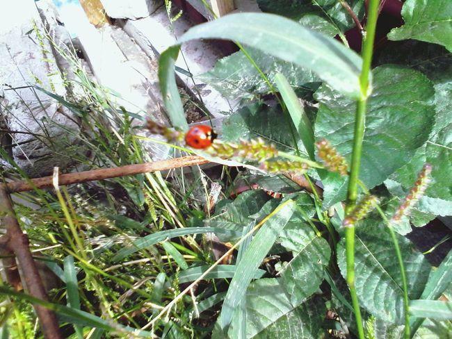 Plants Ladybeetle Eyeem Market Wolfzuachis Green Ladybug