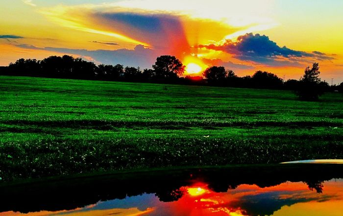 Sunset Tranquil Scene Tree Scenics Tranquility Beauty In Nature Orange Color Sun Water Landscape Cloud - Sky Reflection Field Nature Majestic Non-urban Scene Sunbeam Sky Red Vibrant Color Fluffy Clouds Colour Of Life Eyeem Photo Enjoying Life Diminishing Perspective