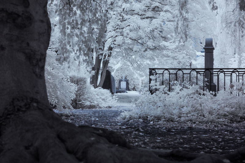 Beauty In Nature Copenhagen Day Denmark Forest Infrared Infrared Photography Leaf Nature Nature Nature Photography No People Outdoors Park Tree White Winter Woods